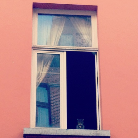 I was walking around Antwerp when I glanced up and saw this cat quietly scoping out all the passerbys below.