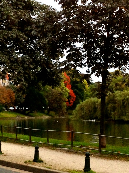 A soul (sole?) red-leafed tree at the Etangs d'Ixelles.